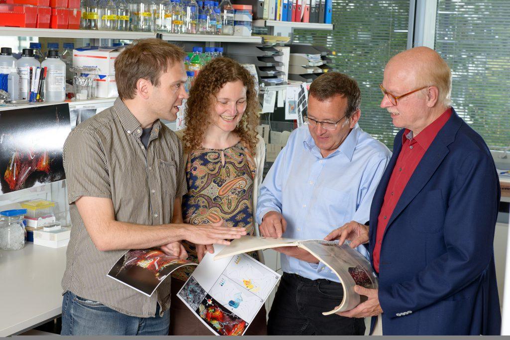 Dr. Christian Westendorf, Dr. Regina Faubel, Prof. Dr. Bodenschatz, and Prof. Dr. Gregor Eichele (from left). © Böttcher-Gajewski / Max Planck Institute for Biophysical Chemistry