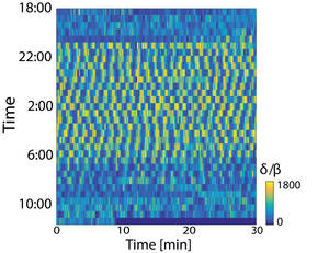 Sleep constitutes an uninterrupted epoch of regular oscillations between two spectral profiles. © MPI f. Brain Research/ M. Shein-Idelson, J. Ondracek, H.-P. Liaw, S. Reiter and G. Laurent
